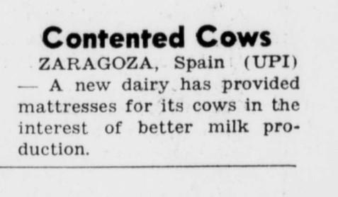 vacas grande