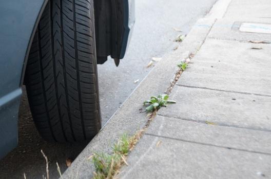Curb Your Wheels.jpg